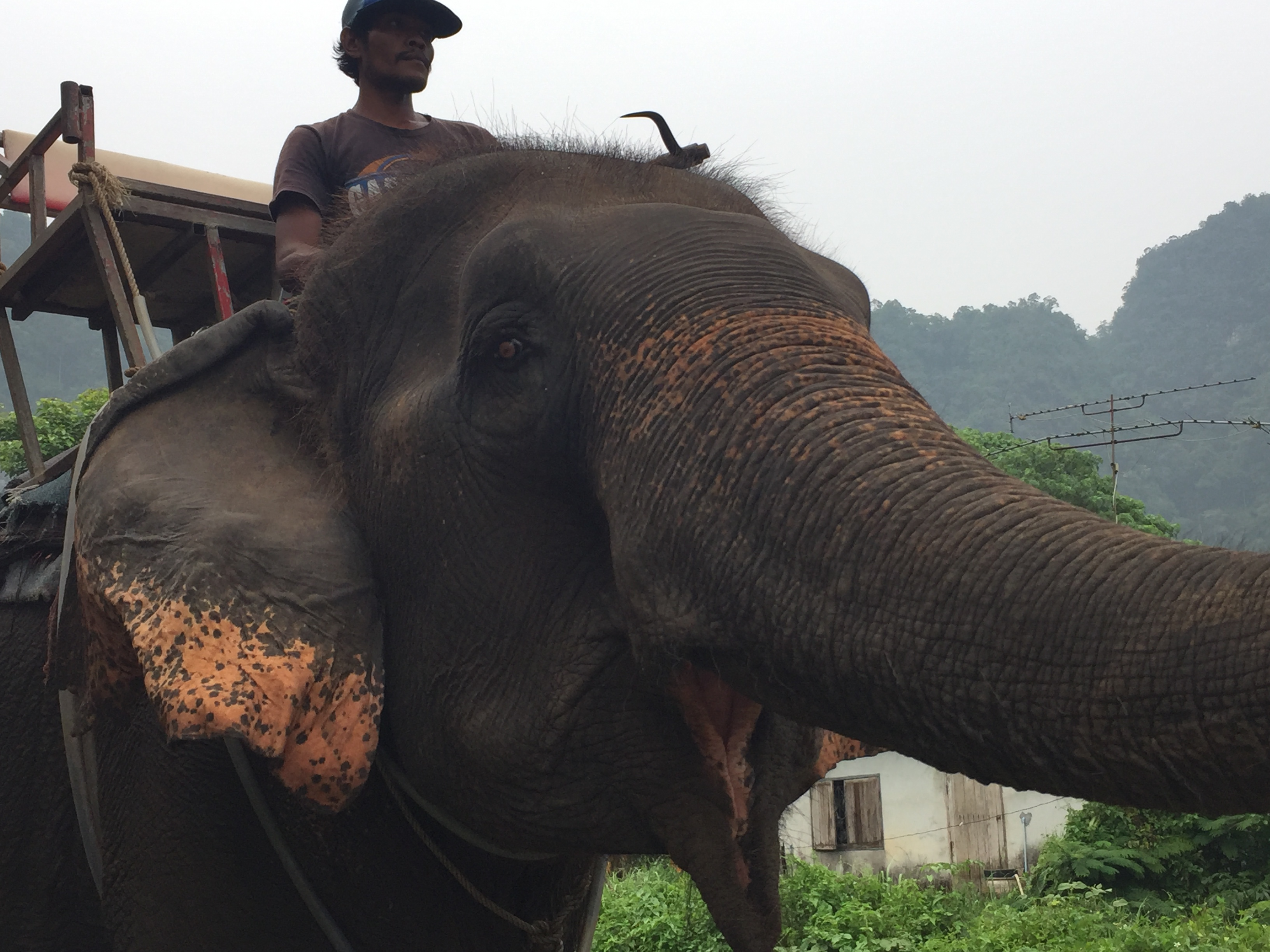 My Moral Dilemma About Riding Elephants